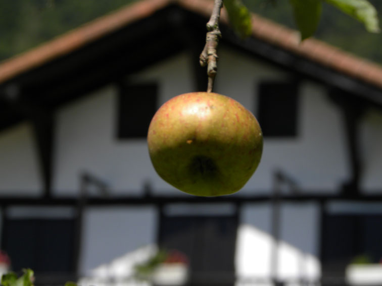 Apple. Arotz-enea. Hondarribia. 2010.