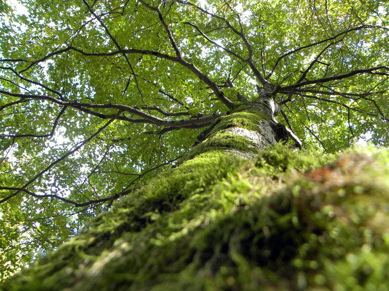 Las copas de los árboles