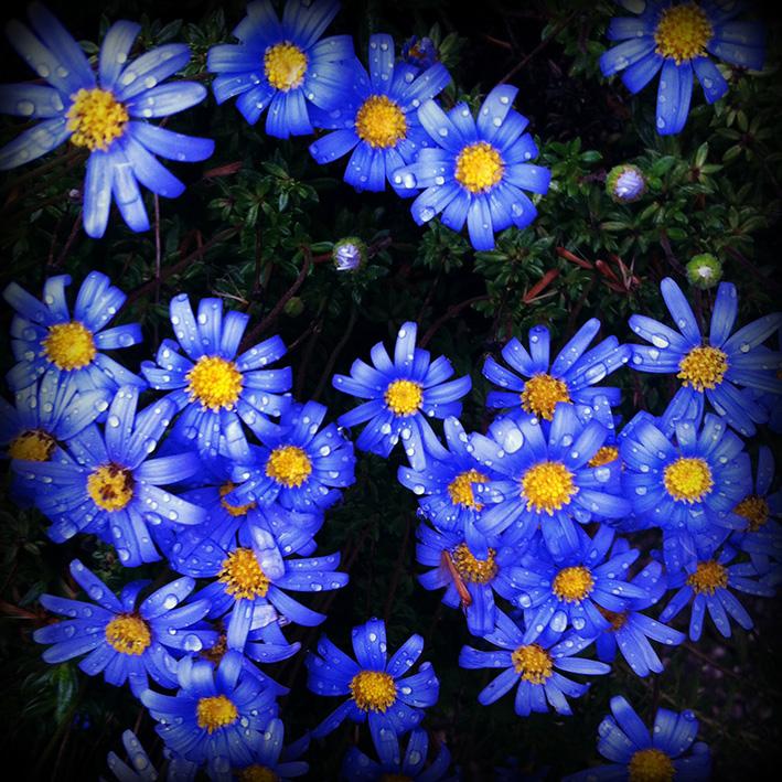 Flowers by Aintzane De Luna